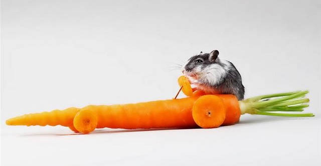 Carrotmouse