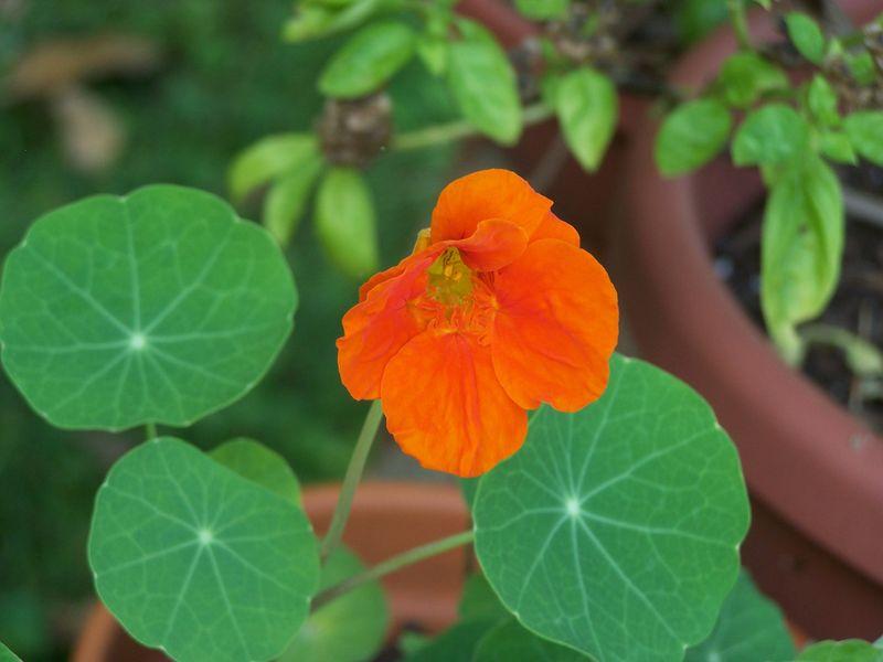 Garden pics 036