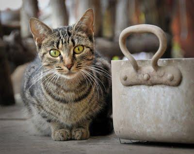 Cat-pot