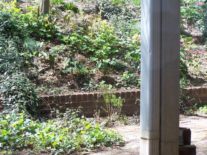 Misc 4-11 garden 008